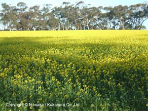 オーストラリアの春