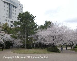 NHK文化センター豊橋教室はちみつ講座110408b