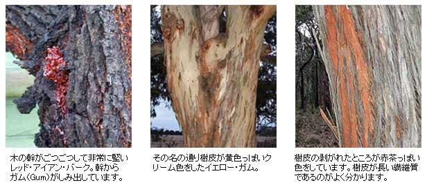 樹皮とガム